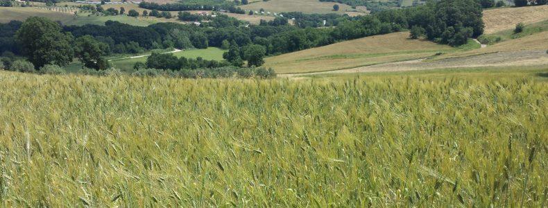 Cover Agroalimentare Valletrigno